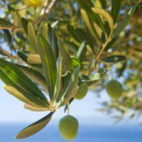 Esposito Olives